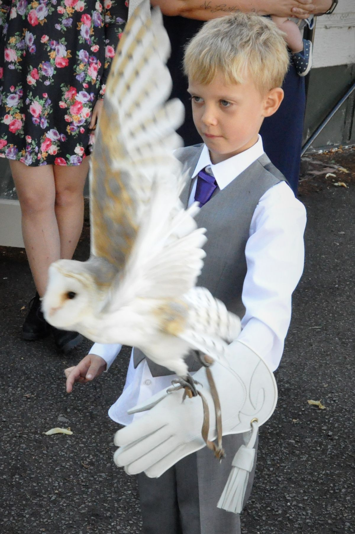 My 7 year old son flying Luna barn owl.. From Wings & Things Crewe...